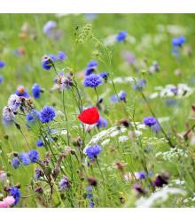 Česká kvetnica - zmes semien - 50 g