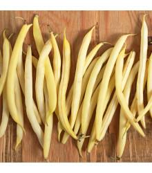 Fazuľa kríčková Sonesta - Phaseolus vulgaris - predaj semien - 20 ks