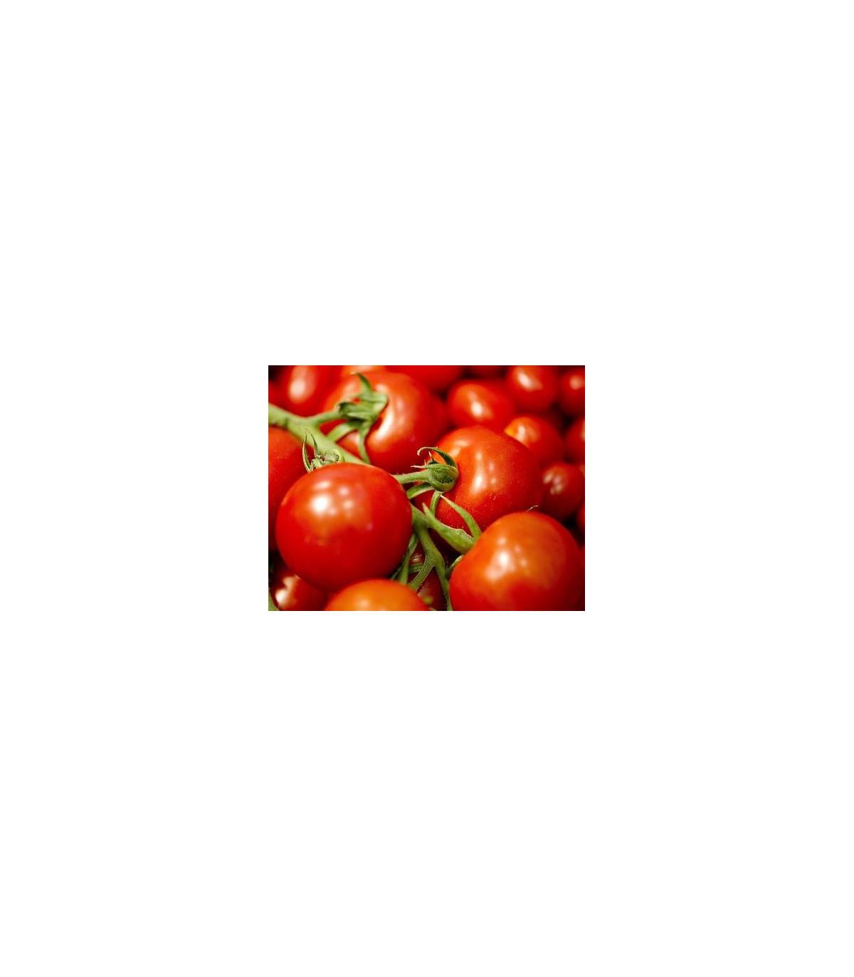 Paradajka Mercedes F1 - kolíková paradajka - Lycopersicon lycopersicum - predaj semien - 5 ks