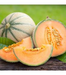 Melón cukrový - Maltese F1 - semená melóna - 8 ks