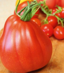 Paradajka Coure di Bue - Lycopersicon lycopersicum - rajčiak - semená - 10 ks