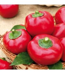 Rajčiaková paprika Topgirl - Capsicum annuum - semená - 7 ks