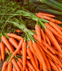 Mrkva Rothild - Daucus carota - osivo mrkvy - 900 ks