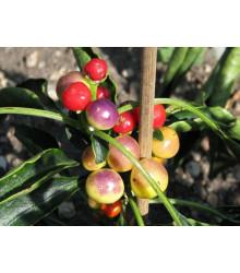 Chilli Nosegay - Capsicum Annuum - semená - 5 ks