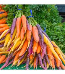 Mrkva Rainbow F1 - Daucus carota - semená mrkvy - 50 ks