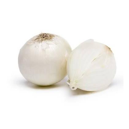 Cibuľa jarná biela- semená cibuľe- 350 ks