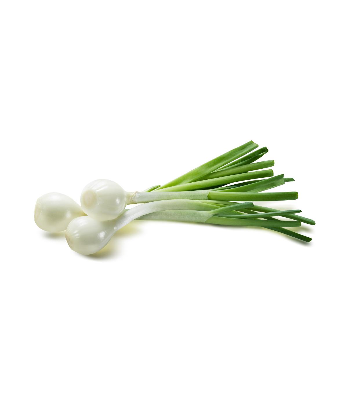 Cibuľa jarná biela- POMPEI- semená cibuľe- 150 ks