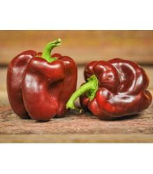 Paprika hnedá - Hnedá Kráska - semená papriky - semiačka - 9 ks
