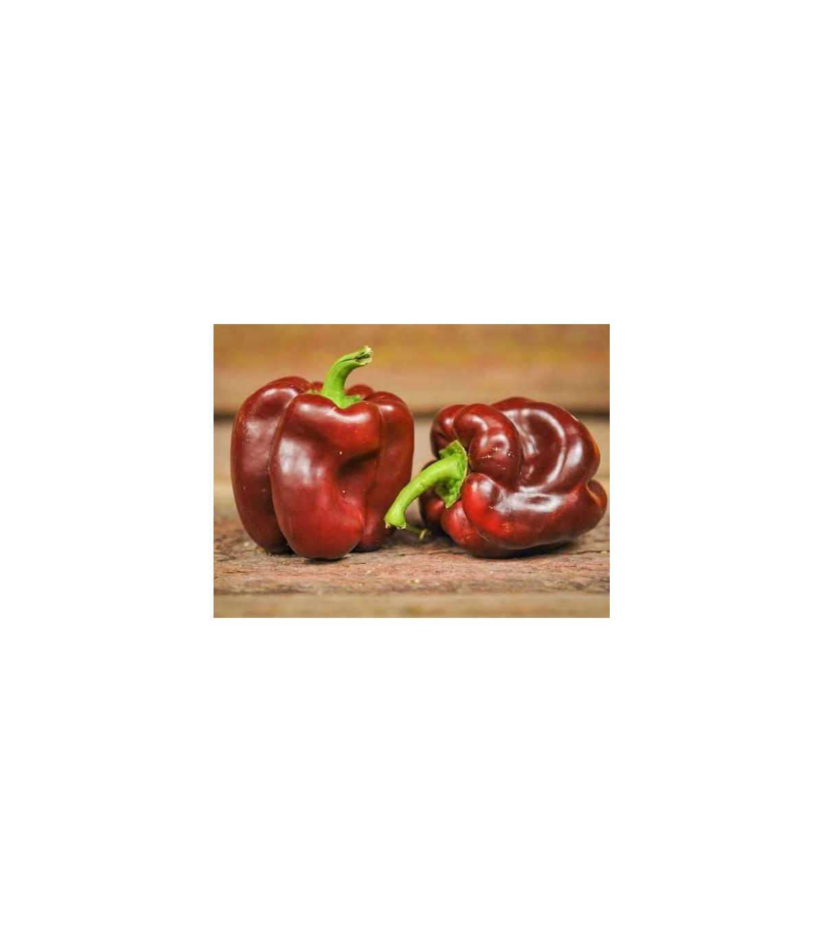 Paprika Hnedá Kráska - Capsicum annuum - semená - 9 ks
