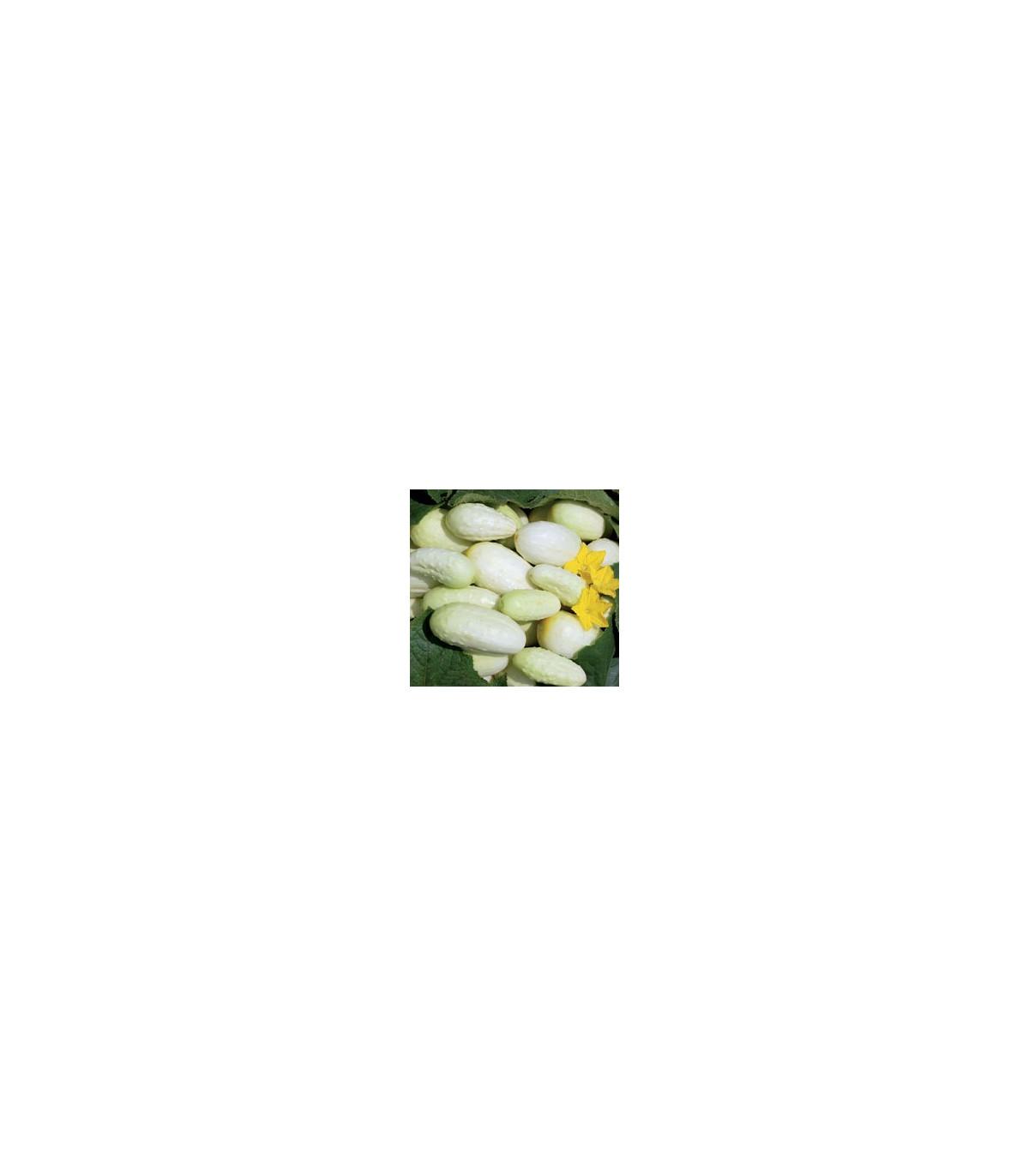 Uhorka- Biela- semená- 5 ks