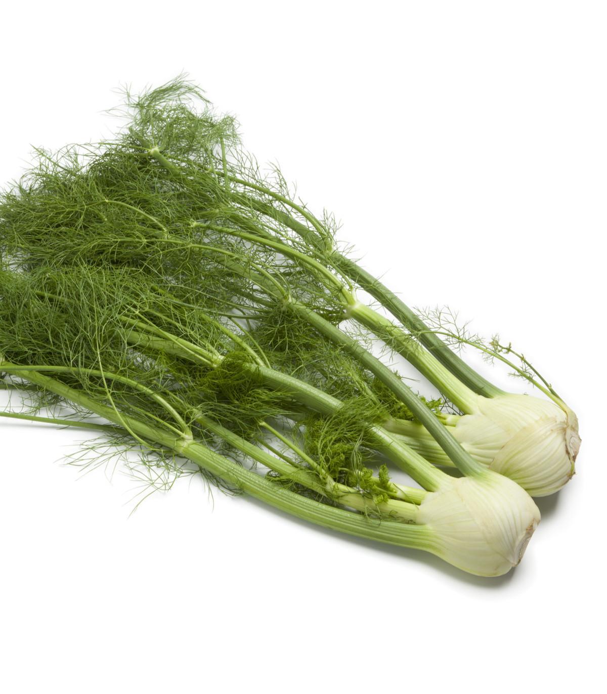 Fenikel buľvový Finale - Foeniculum vulgare - semená - 1 g