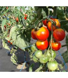 Paradajka stupická poľná skorá - Lycopersicon Lycopersicum - rajčiak - semená - 35 ks