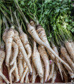 Paštrnák dlhý biely - Pastinaca sativa - predaj osiva - 1 gr