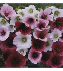 Slezovka trojklanná - zmes - Malope trifida - semená - 30 ks
