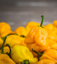 Chilli Trinidad Scorpion Butch žlté - Capsicum Chinense - semená - 5 ks