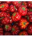 Paradajka Costoluto Fiorentino - kolíková - predaj semien paradajok - Lycopersicon esculentum - 7 ks