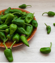 Chilli Pimentos de Padron - semená - 7 ks
