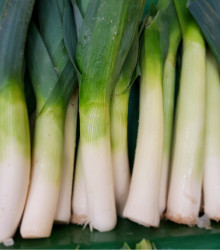 BIO Pór letný Megaton F1 - Allium porum - bio semená - 10 ks