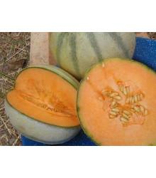 Melón cukrový - semená melóna - semiačka - 5 ks