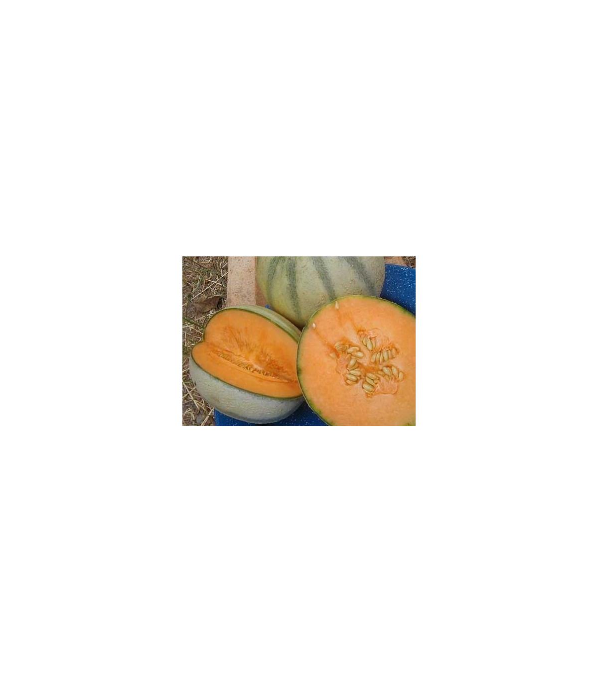 Melón cukrový- semená- 5 ks
