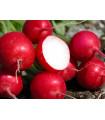 Reďkovka Ria - predaj osiva reďkovky - 0,5 gr