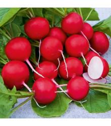 Reďkovka Saxa - semená reďkovky - semiačka - 0,5 gr