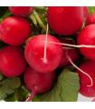 Reďkovka červená Sora - predaj semien reďkovky - Raphanus sativus - 50 ks