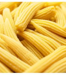 Kukurica cukrová Minigold - Zea Mays - semená - 35 ks