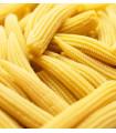 Kukurica cukrová Minigold - Zea Mays - semená - 4 g