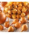 Cibuľa sadzačka Stuttgarter Riesen - Allium cepa - cibuľky - 500 g