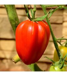 Paradajka kolíková Big mama F1- Lycopersicon esculentum - rajčiak - semená - 7 ks