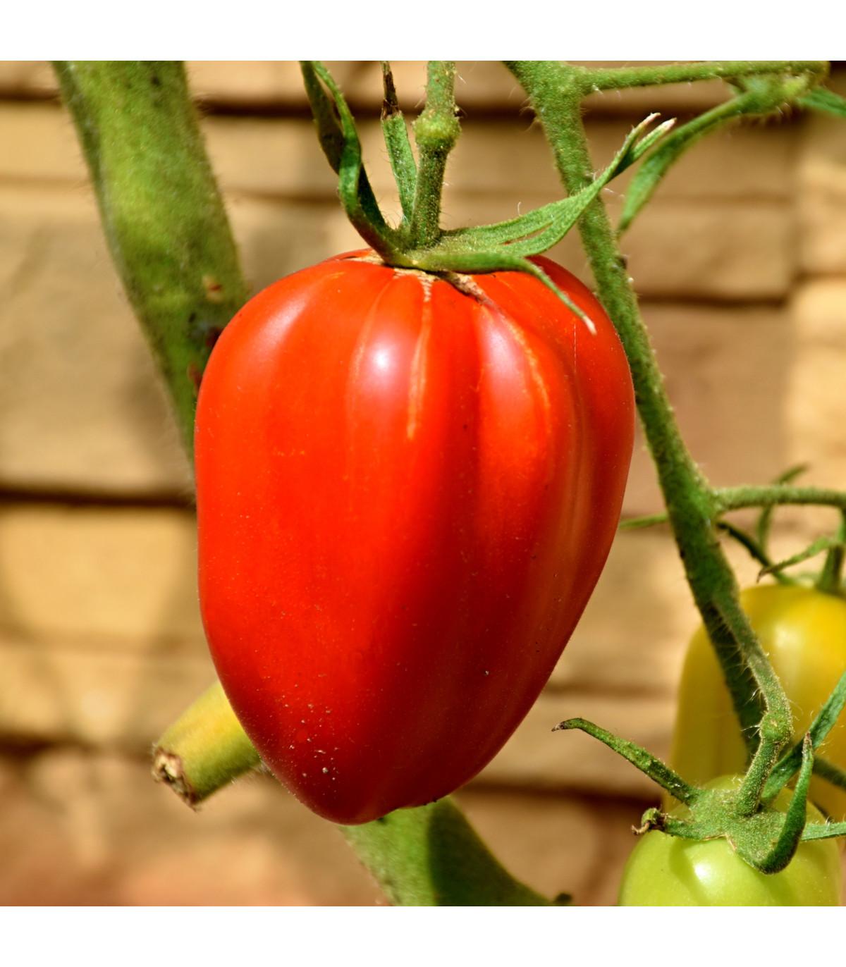 Paradajka Big mama - kolíková odroda - predaj semien paradajok - 7 ks