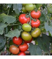 Paradajka Crimson Crush F1 - Lycopersicon esculentum - rajčiak - semená - 7 ks