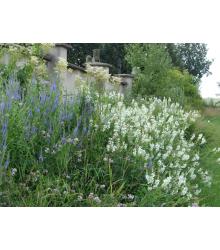Zámocká lúka - semená lúčnych kvetov a tráv - 10 g