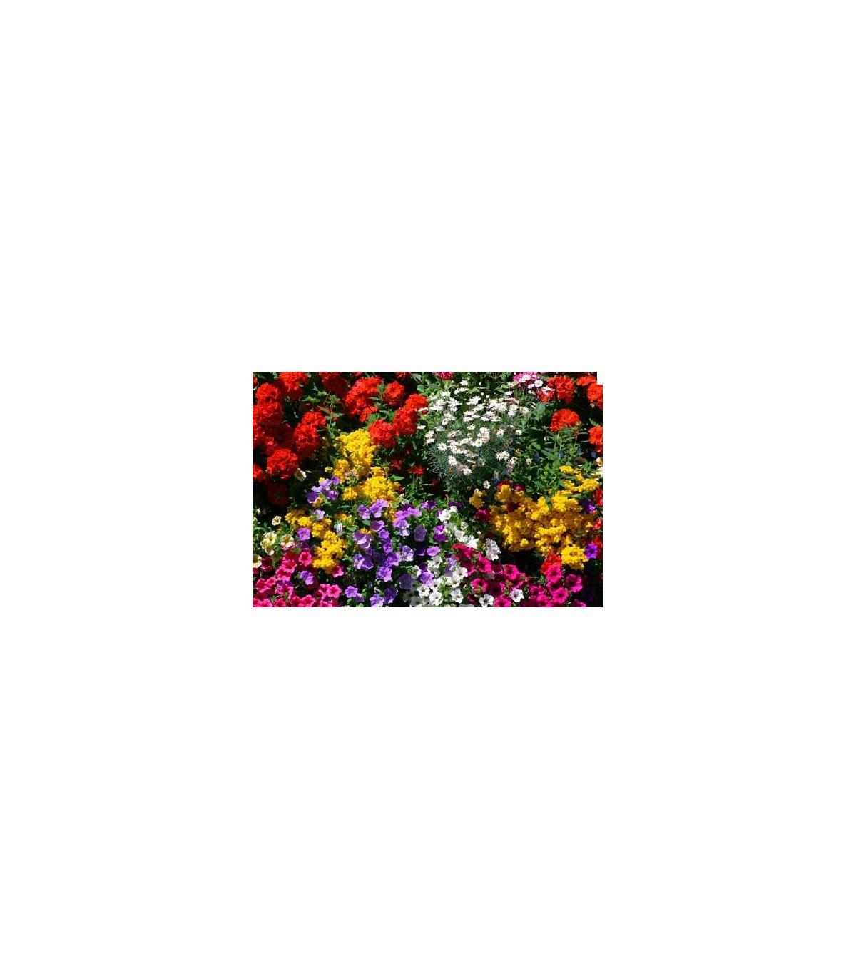 letničky nízke - zmes - semená - 0,9 g