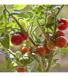 Paradajka Obrie Hrozno - Lycopersicon lycopersicum - rajčiak - semená - 7 ks