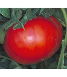 Paradajka - Verte neverte - semená paradajky - semiačka - 6 ks