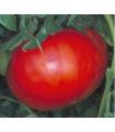 Paradajka - Verte neverte - predaj semien - 6 ks