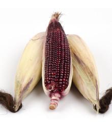 Kukurica jahodová - Zea mays multicolor - semená - 20 ks