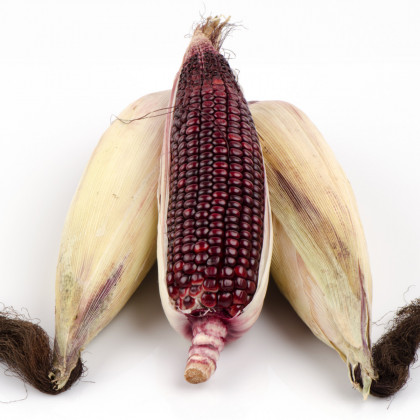 Kukurica jahodová- Zea mays multicolor- semená Kukurice- 20 ks