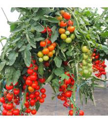 Paradajka Gallant F1 - Solanum lycopersicum - rajčiak - semená - 10 ks