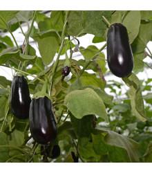 Baklažán vajcoplodý Black Beauty - Baklažán - semená baklažánu - semiačka - 60 ks