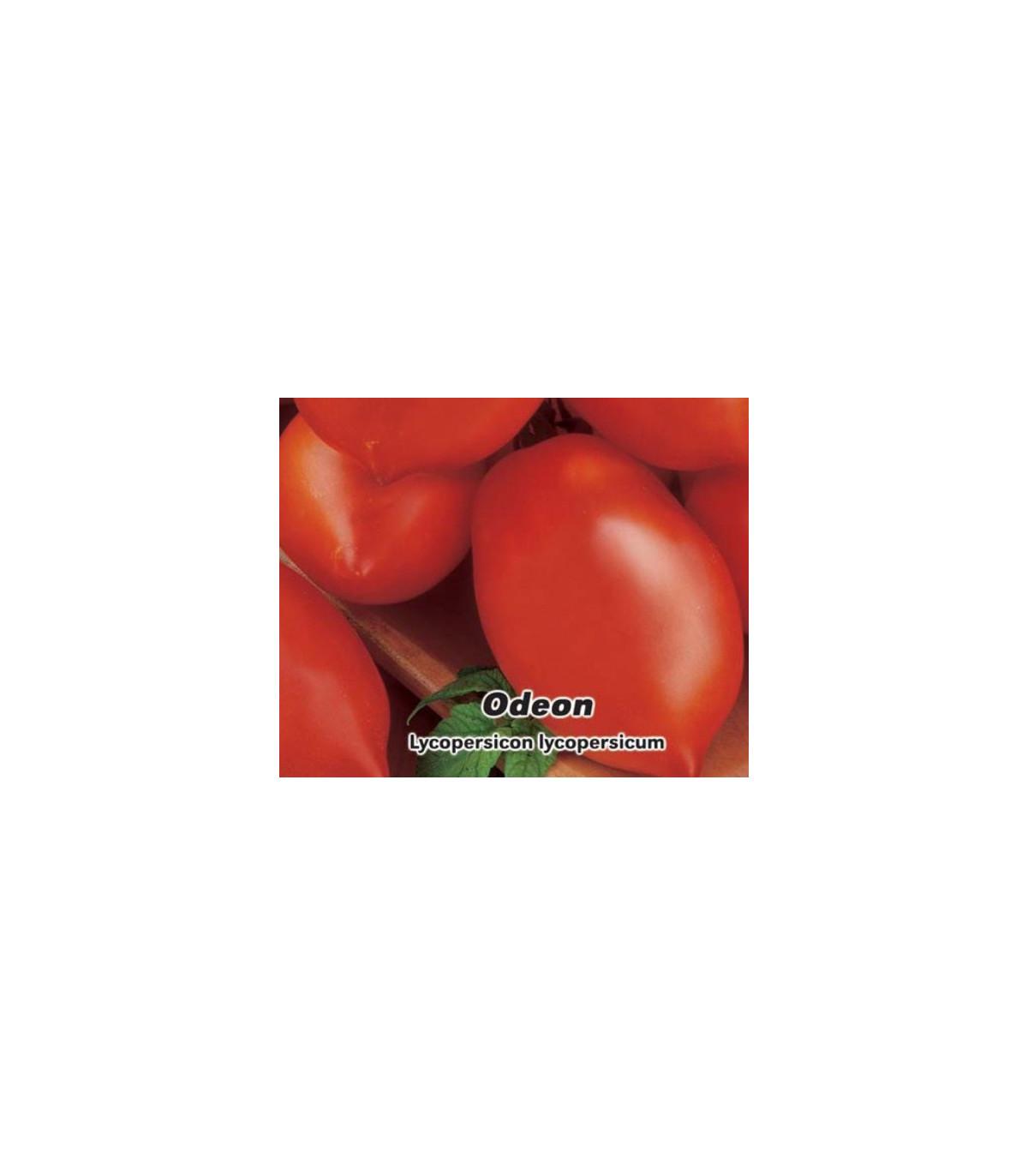Paradajka Odeon kríčková - Lycopersicon Lycopersicum - predaj semien paradajok - 0,1 g