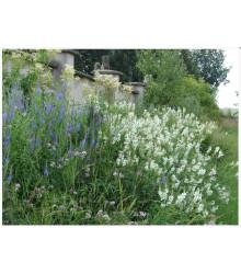 Zámocká lúka - semená lúčnych kvetov a tráv - 50 g