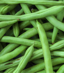 Fazuľa kríčková Odeon - Phaseolus vulgaris - semená - 20 ks