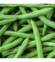 Fazuľa kríčková Odeon - semená fazule - 20 ks