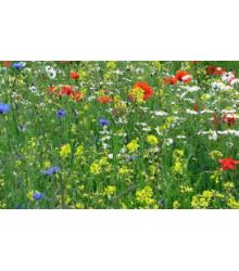 Trváce kvety pre včely - semená - 50 g