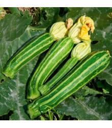BIO cuketa F1 Green Tiger - Cucurbita pepo - tekvica - bio semená cukety - 5 ks