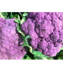 Karfiol hybridný fialový Grafitti F1 - Brassica Oleracea L. Convar. Botrys - semená - 10 ks