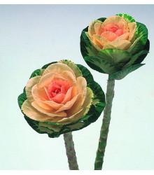 Okrasná kapusta Sunrise - Brassica Oleracea - semená - 20 ks